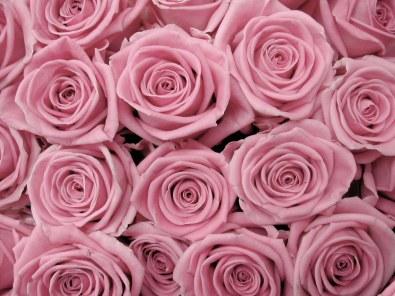 Rose_Background_Texture_Stock_by_SockMonkeyStock