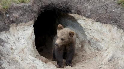 do-bears-live-in-caves_09177f0d-6a8b-4941-87fd-c783e8eaa896