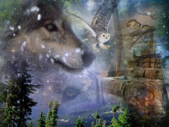 Owl-Wolf-Dream