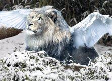 angel_lion_by_mr_lemonhead