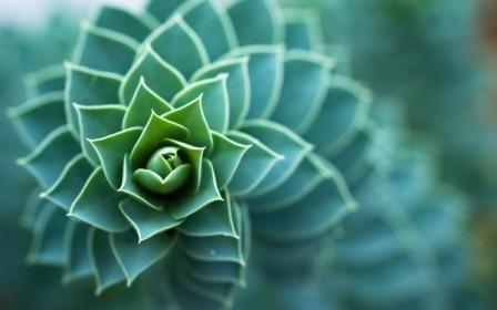 Succulent-Plant-600x375.jpg