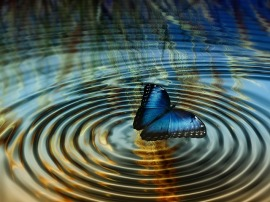 bluebutterflywaterripples