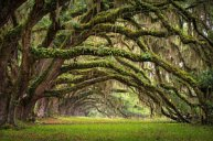 avenue-of-oaks-charleston-sc-plantation-live-oak-trees-forest-landscape-dave-allen
