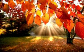 orange-fall-leaves-wallpaper-76076