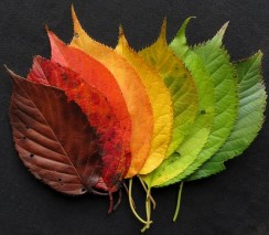 autumn-leaves-1486062_960_720