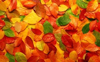 Fall-Leaves-Wallpaper-On-Wallpaper-Hd-1