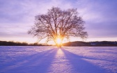 ws_Shiny_Sun_Tree_&_Snow_Scenery_1680x1050