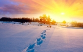 ws_Sun_Trees_Snow_&_Foot_Step_2560x1600