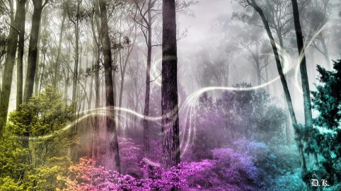 forest-enchanted-colorful-splendor-colors-magnificent-magic-trees-amazing-beauty-beautiful-cool-fantasy-miracle-fog-pretty-mist-4k-wallpapers-1366x768.jpg