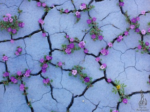 flower-tree-growing-concrete-pavement-102