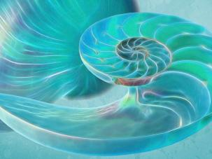 glowing-turquoise-nautilus-shell-gill-billington